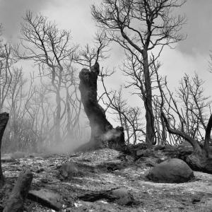 Relatório anual sobre os incêndios florestais – 2019
