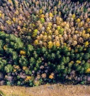 Pacto Ecológico Europeu: Comissão propõe nova estratégia para proteger e recuperar florestas da UE