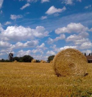 Visão a longo prazo para as zonas rurais da UE: mais fortes, ligadas, resilientes e prósperas