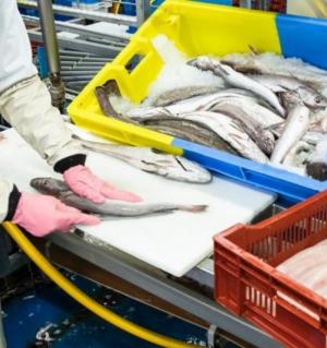Eurobarómtero: inquérito revela que portugueses continuam a liderar consume de peixe e produtos do mar apesar da crise da COVID-19